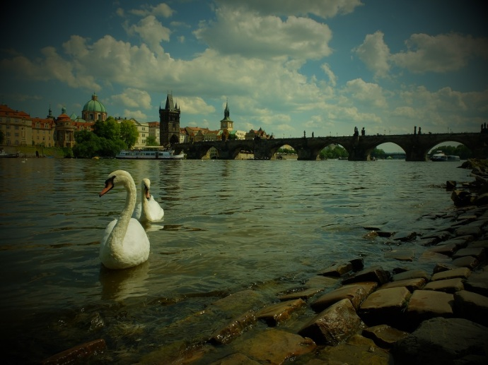 All of Prague looks like it's posing for you, ready for its close-up, including the swans.